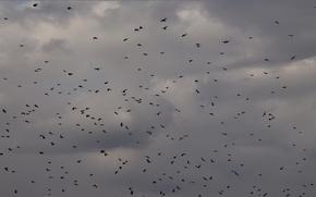 Картинка небо, облака, птицы, летят