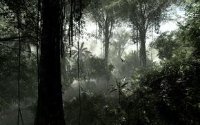 Картинка деревья, природа, влага, растения, джунгли, лианы, сельва, тропический лес, буш