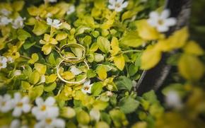 Картинка листья, кольца, белые лепестки
