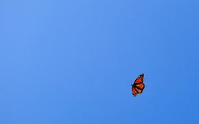 Картинка небо, полет, голубое, оранжевая, минимализм, Бабочка