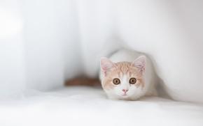Обои кошка, прячется, Hannah, Ben Torode, выглядывает, морда, ткань