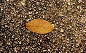 Картинка осень, асфальт, листок