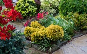 Картинка цветы, Англия, сад, кусты, альстрёмерия, Walsall Garden