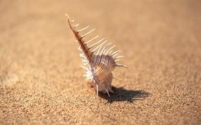 Обои песок, иголки, минимализм, фокус, Ракушка