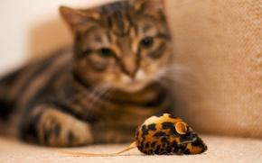 Картинка мышь, Кот, наблюдения, игрушечная