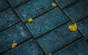 Картинка осень, асфальт, текстура, yellow
