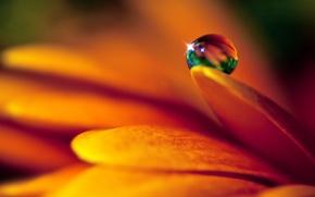 Картинка цветок, капля, лепестки
