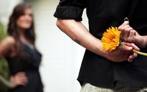 Картинка цветок, девушка, ситуация, кольцо, парень