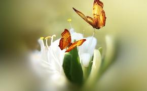 Картинка цветок, бабочки, краски, стилизация, Josep Sumalla