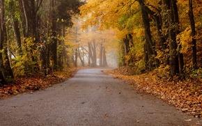 Обои осень, дорога, пейзаж