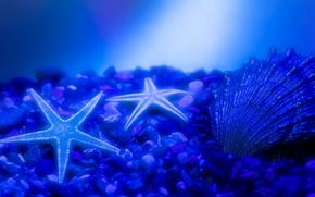 Обои синий, ракушка, вода, морска звезда, морское дно, камни, свечение