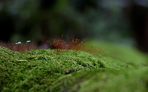 Картинка зелень, трава, мох