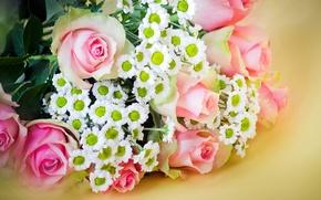 Картинка цветы, розы, букет, размытие, хризантемы, pink, roses, chrysanthemum