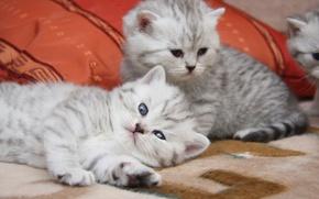 Обои мило, котята, кошки