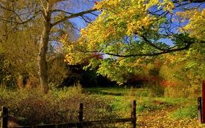 Картинка деревья, двор, листья, тропинка, забор, осень, небо, дорожка, лес
