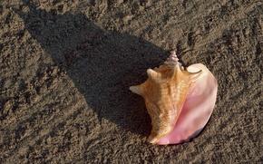 Обои песок, пляж, Ракушка