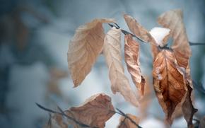 Обои холод, зима, осень, листья, снег, дерево, настроение, ветка, мороз, макро обои, осенние обои, зимние обои
