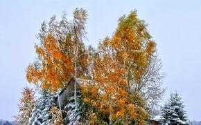 Обои небо, осень, деревья, листья, дом