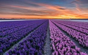 Обои нидерланды, провинция