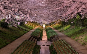 Картинка город, парк, Japan, Kanagawa Prefecture, Yokohama-shi