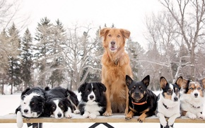Картинка собаки, природа, много