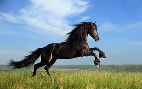 Обои трава, свобода, облака, лошадь, грива
