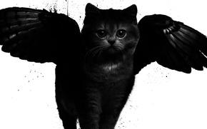 Обои кот, крылья, арт, черно-белое, стиль