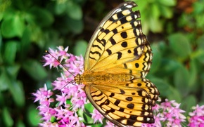 Картинка цветок, лето, цветы, бабочка, размытость, розовые, yellow, желтая, butterfly, wallpaper.