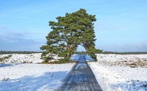 Картинка дорога, поле, небо, снег, природа, дерево, весна