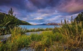 Картинка трава, горы, тучи, озеро, берег, Новая Зеландия, камешки, Lake Tekapo