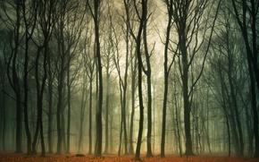 Картинка осень, лес, природа, туман