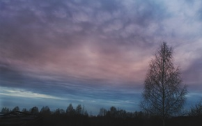 Картинка осень, лес, небо, облака, вечер, береза
