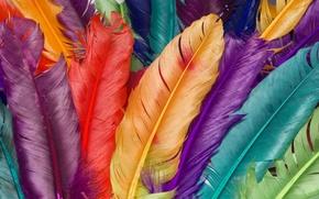 Обои цвет, макро, перья