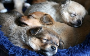 Картинка уют, собаки, щенки