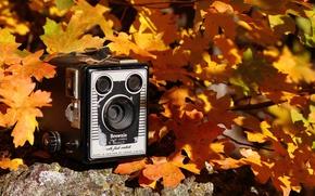 Картинка осень, фон, камера