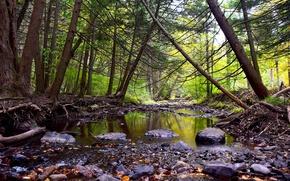 Картинка осень, лес, листья, деревья, ручей, камни