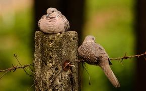 Картинка птицы, проволока, пара, голуби, столбик
