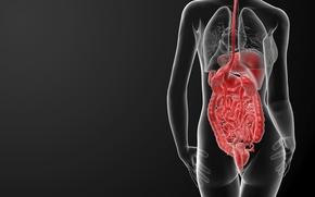 Картинка woman, body, human organs