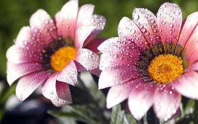 Картинка роса, цветы, пррода, капельки, капли