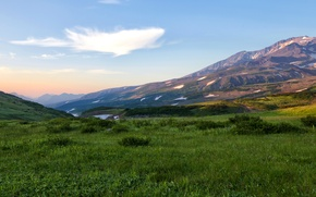 Обои россия, камчатка, kamchatka, поле, трава