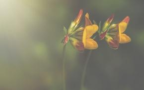 Картинка flowers, bokeh, petals, stalks, yellow petals