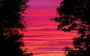 Картинка небо, облака, деревья, силуэт, зарево