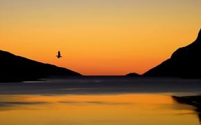 Картинка небо, пейзаж, закат, горы, озеро, птица