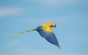 Картинка крыло, цвета, небо, полет, ара