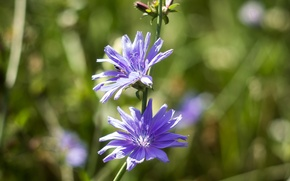 Картинка flower, macro, боке, flora, mmd, boke, helios