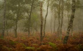 Картинка осень, лес, трава, деревья, туман