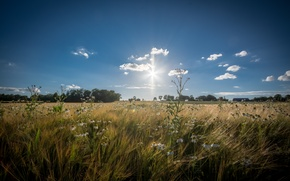 Обои цветы, поле пшеницы, дома, деревья, фермы, пшеница, поле, солнце, небо, горизонт, облака
