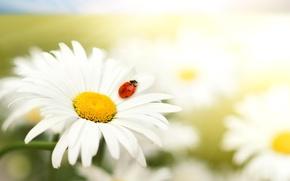 Обои красный, животные, макро, цветы, природа, белый, хищники )), звери