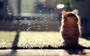 Обои кошка, пузыри, Daisy, мыльные, © Ben Torode