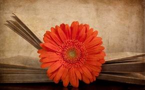 Картинка цветок, стиль, фон, книга